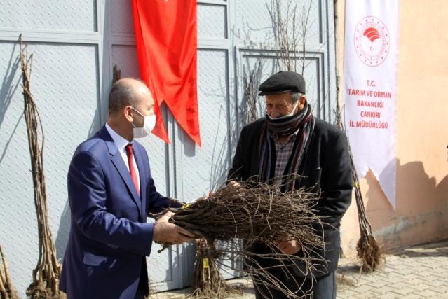 Çankırı'da 10 bin meyve fidanı toprakla buluşacak